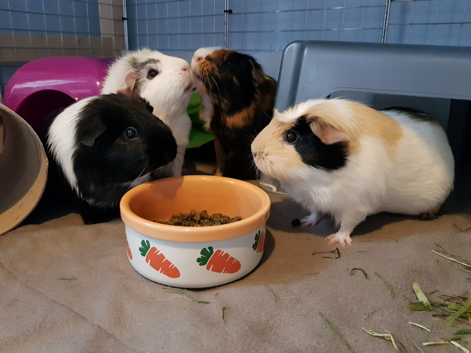 Tilly, Dorothy, Percy & Gertie
